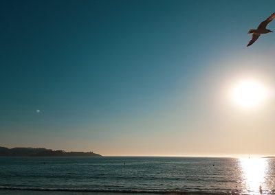 gaviota-sol-crepusculo-playa